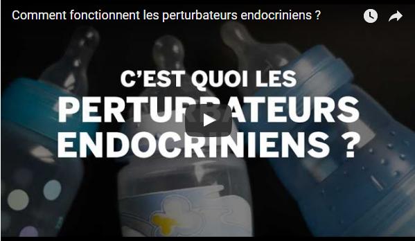 Comment fonctionnent les perturbateurs endocriniens ?